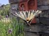 Die Region der Ardèche ist ein Paradies für Schmetterlinge aller Art