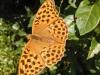 Schmetterlinge sind rund ums Ferienhaus gerne gesehen